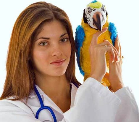 Psittacosis: threat for birds and people