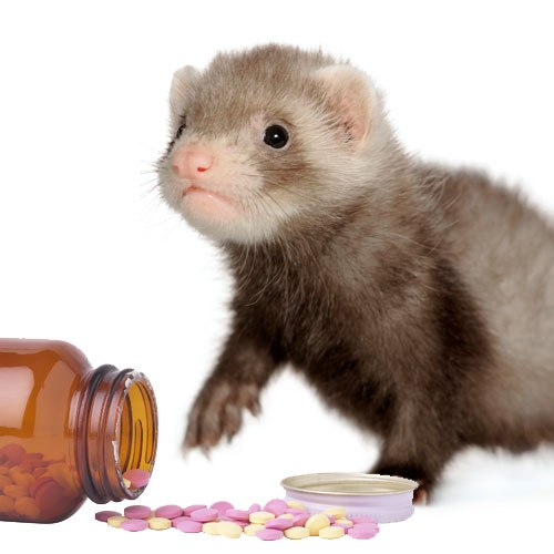 How to give medicine to your ferret